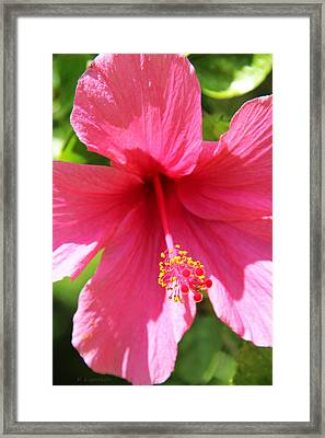 Shades Of Pink - Hibiscus Framed Print