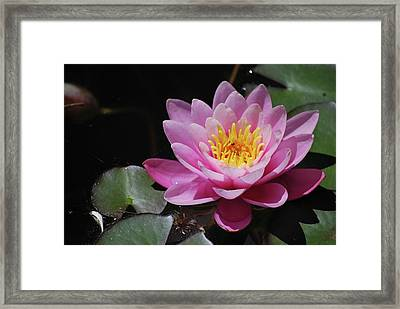 Framed Print featuring the photograph Shades Of Pink by Amee Cave