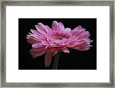 Shades Of Pink Framed Print by Juergen Roth