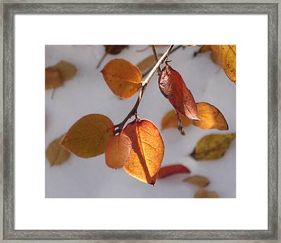 Shades Of Red And Yellow Framed Print by Marilynne Bull