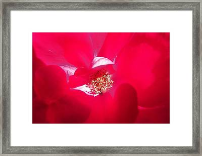 Shades Of Red Framed Print by Sheri McLeroy