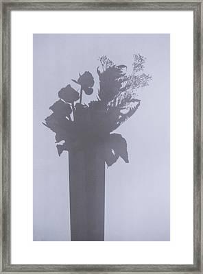 Shades Of Roses Framed Print
