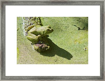 Shadow And Frog Framed Print