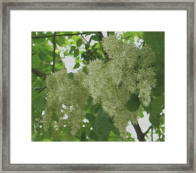 Framed Print featuring the photograph Shadow And Light Canvas by Manuela Constantin