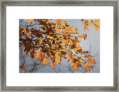 Shadow And Light - Framed Print