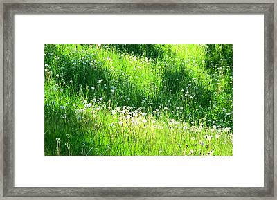 Shadow And Light On The Hill Ae Framed Print by Lyle Crump