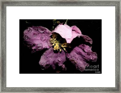 Shadow Blush Framed Print