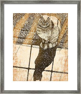 Shadow Cat Framed Print by Laura Brightwood