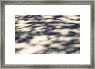 Shadow Dancing Framed Print by Sarita Rampersad