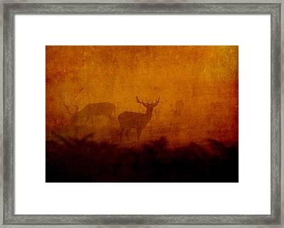 Shadow Deer Framed Print by Sarah Vernon