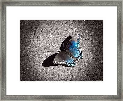 Shadow Games Framed Print