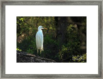 Shadow Heron Framed Print