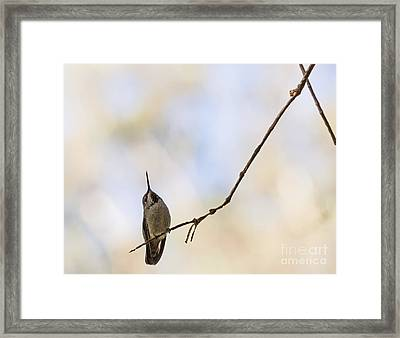 Shadow Hummer Framed Print by Kate Brown