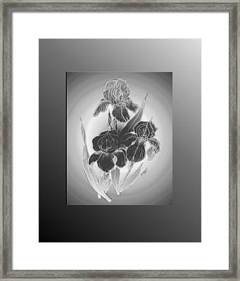 Shadow Iris II Framed Print by Jacquie King