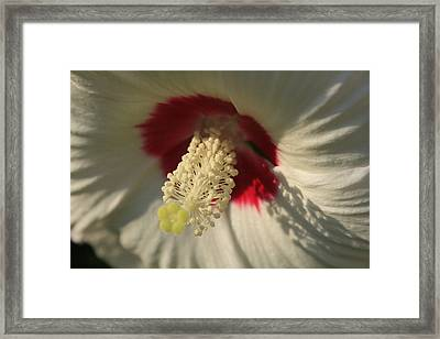 Shadow Lace Framed Print by Alan Rutherford