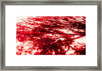 Shadow Of A Tree Framed Print