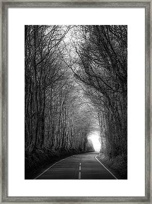 Shadow Of Trees Framed Print by Svetlana Sewell