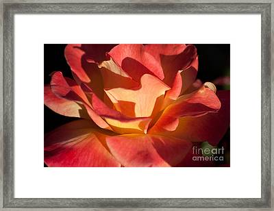 Shadow Play Framed Print by Brenda Carpenter