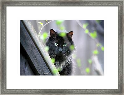 Shadow Predator Framed Print