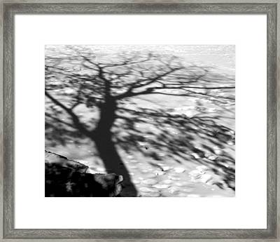 Shadow Tree  Herrick Lake  Naperville Illinois Framed Print
