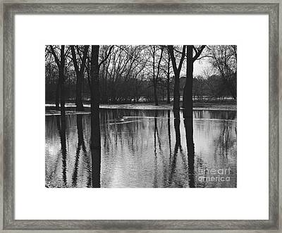 Shadow Trees Framed Print by Cendrine Marrouat