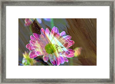 Shadowed Flower Framed Print by Jeff Swan