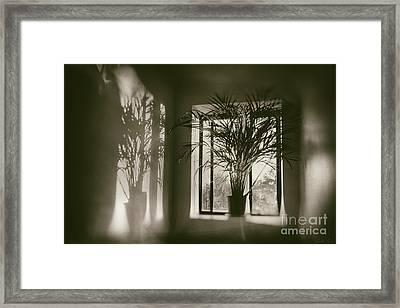 Shadows Dance Upon The Wall Framed Print