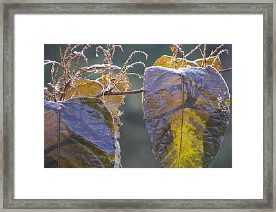 Shadows Framed Print by JAMART Photography
