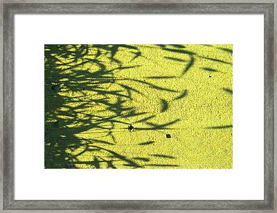 Shadows Framed Print by Lenore Senior