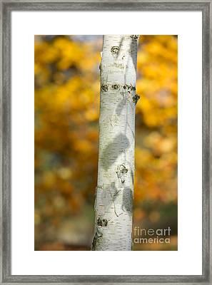 Shadows Of Autumn Framed Print