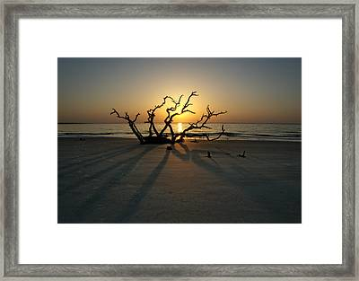 Shadows Of Driftwood Framed Print