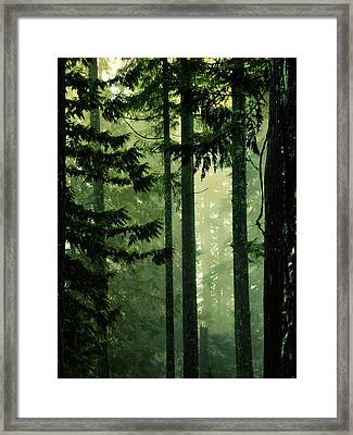 Shadows Of Light Framed Print