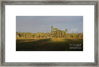 Shadows Of The Cypress Framed Print by Matt Tilghman
