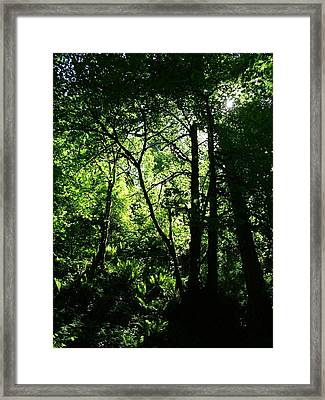 Shadows Of The Forest Framed Print by Nick Gustafson