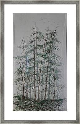Shadows Of The Forest Framed Print by Rick Silas