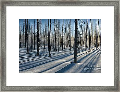 Shadows Of The Forest Framed Print by Sandra Bronstein