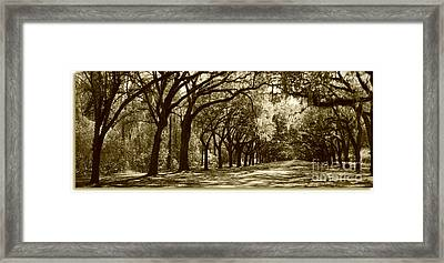 Shadows Of The South Framed Print