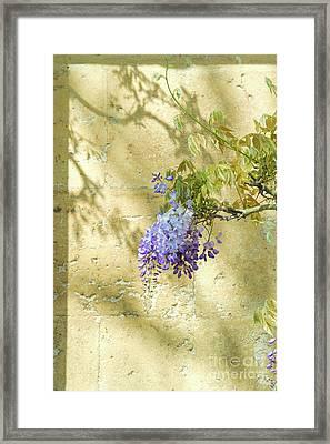 Shadows Of Wisteria Framed Print by Tim Gainey