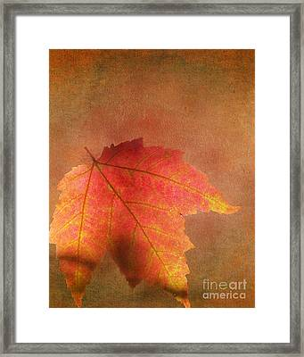 Shadows Over Maple Leaf Framed Print