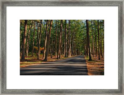Shadows Road - Ocean County Park Framed Print