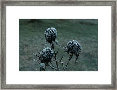 Shadowy Frozen Pods From The Darkside Framed Print by Douglas Barnett