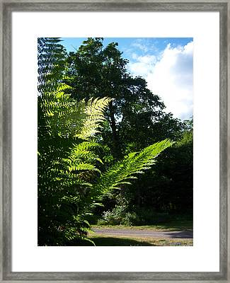 Shads Of Green Framed Print by Ken Day