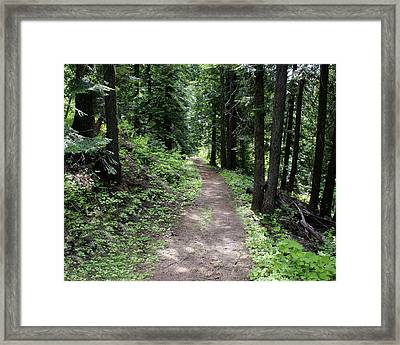 Framed Print featuring the photograph Shady Grove Path by Ben Upham III