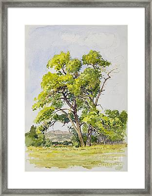 Shady Oak Tree Framed Print by James Robert MacMillan