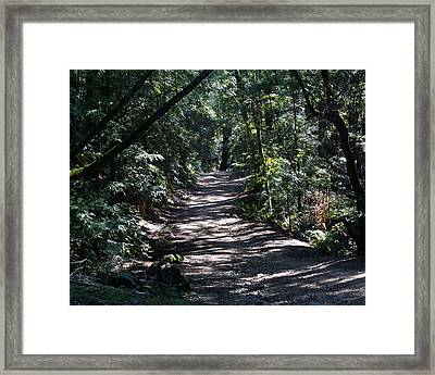 Framed Print featuring the photograph Shady Road On Mt Tamalpais by Ben Upham III