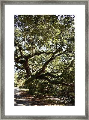 Shady Side Of Town Framed Print