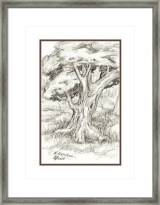 Shady Tree Framed Print by Ruth Renshaw