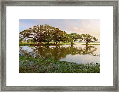 Shady Tropical Trees By The Lake, Sri Lanka Framed Print