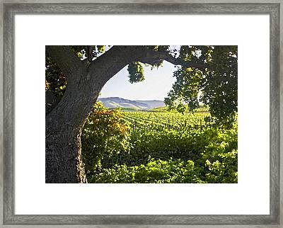 Shady Vineyard Framed Print
