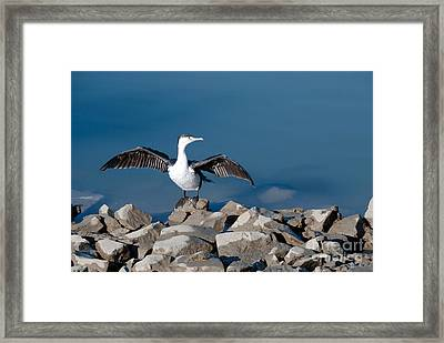 Framed Print featuring the painting Shag Drying The Wings by Yurix Sardinelly